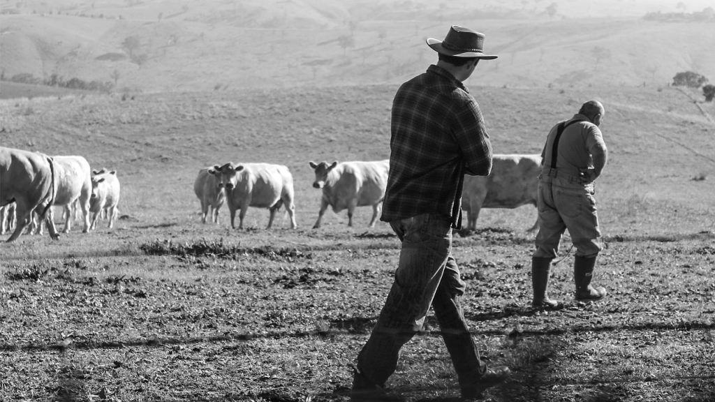 farmers tending to cattle